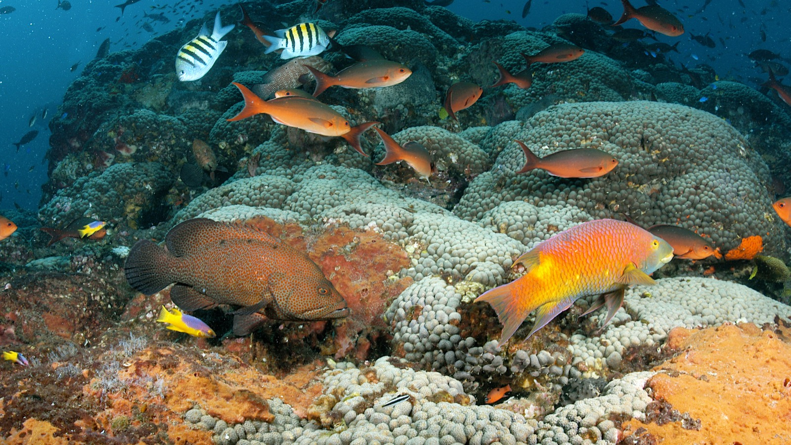 Fish over a vibrant coral reef