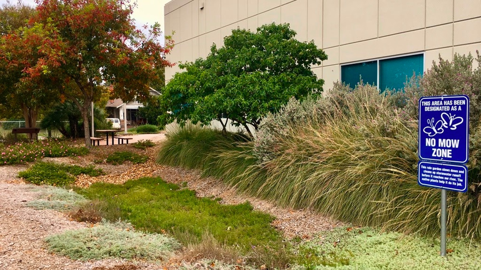 A pretty flowering rain garden in front of a building.