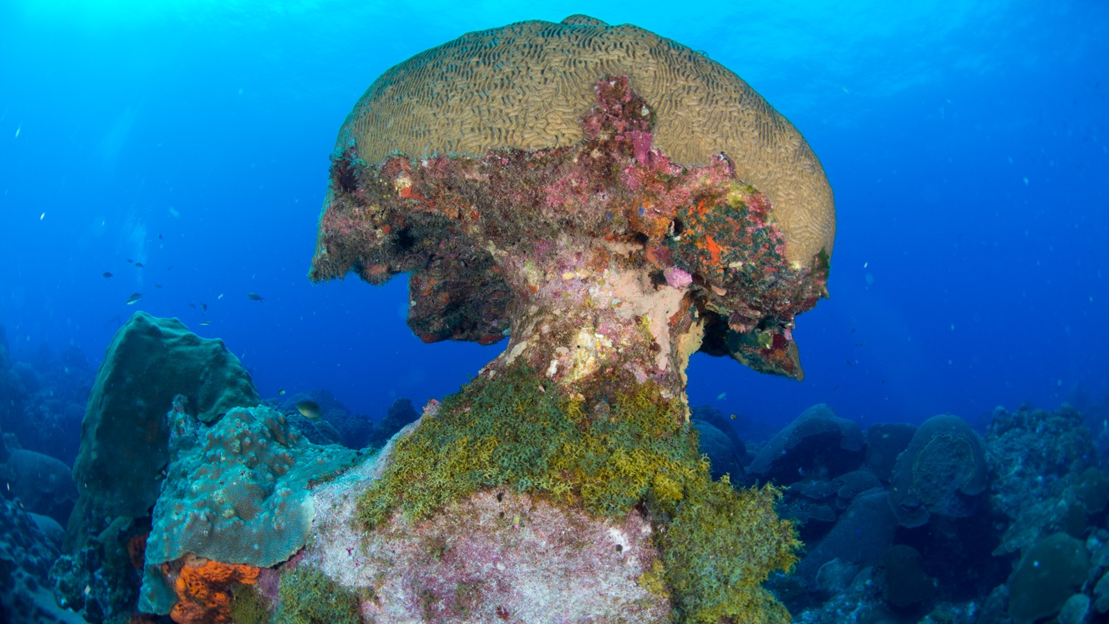 A huge boulder of colorful corals in the Flower Garden Banks National Marine Sanctuary